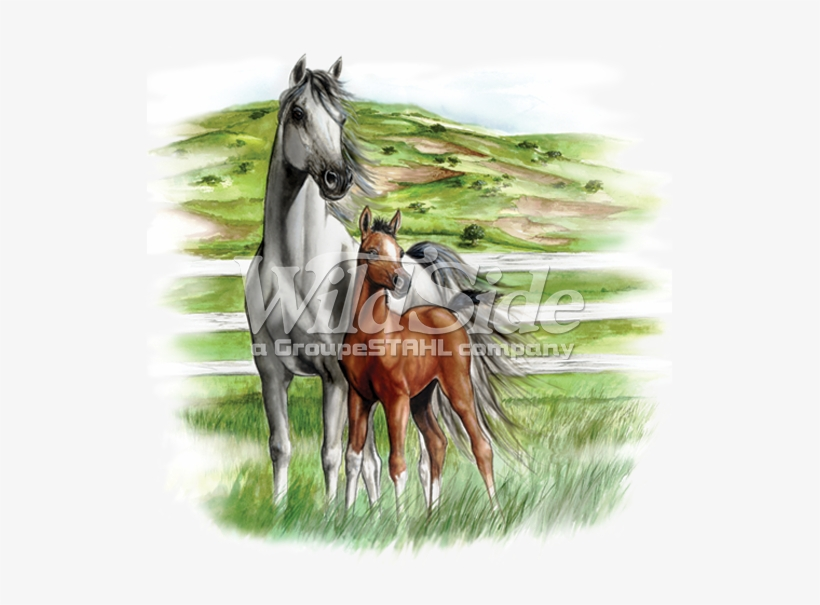 White & Brown Horses - Horse, transparent png #4955
