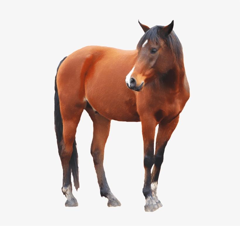 Hol Horse Half Horse, transparent png #5392