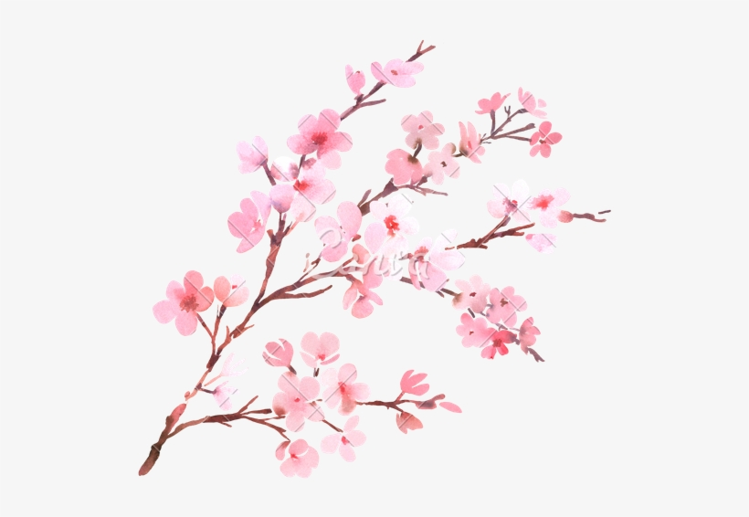 Canva Watercolor With Spring Tree Branch In Blossom - Watercolor Cherry Blossom Flower, transparent png #6655