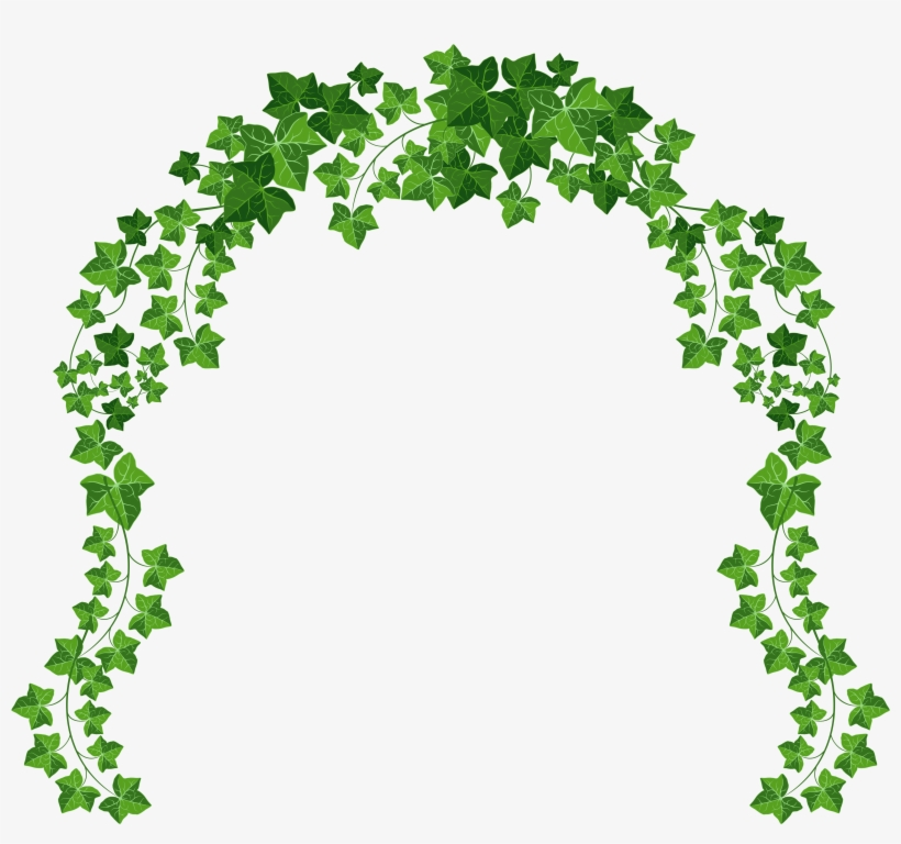 Vine Png Picture Gallery - Vines With Transparent Background, transparent png #7355
