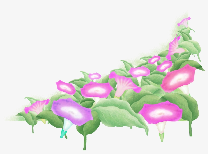 Hand Painted Watercolor Morning Glory Decoration Png - Japanese Morning Glory, transparent png #7454