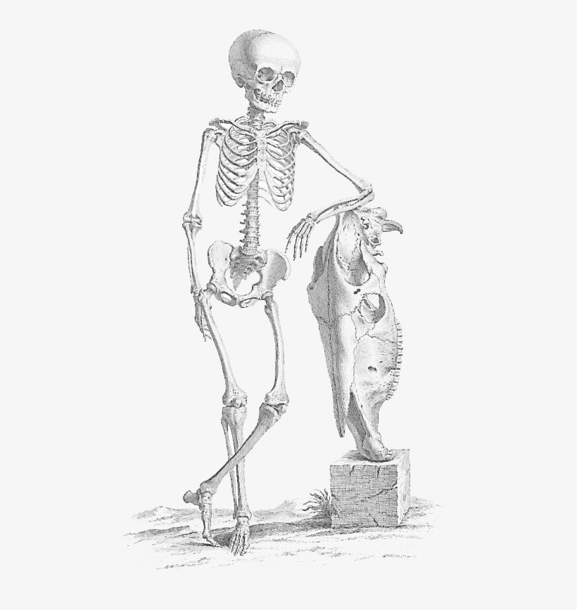 Halloween Skeleton Png File - Halloween Skeleton Skeleton Png, transparent png #8013