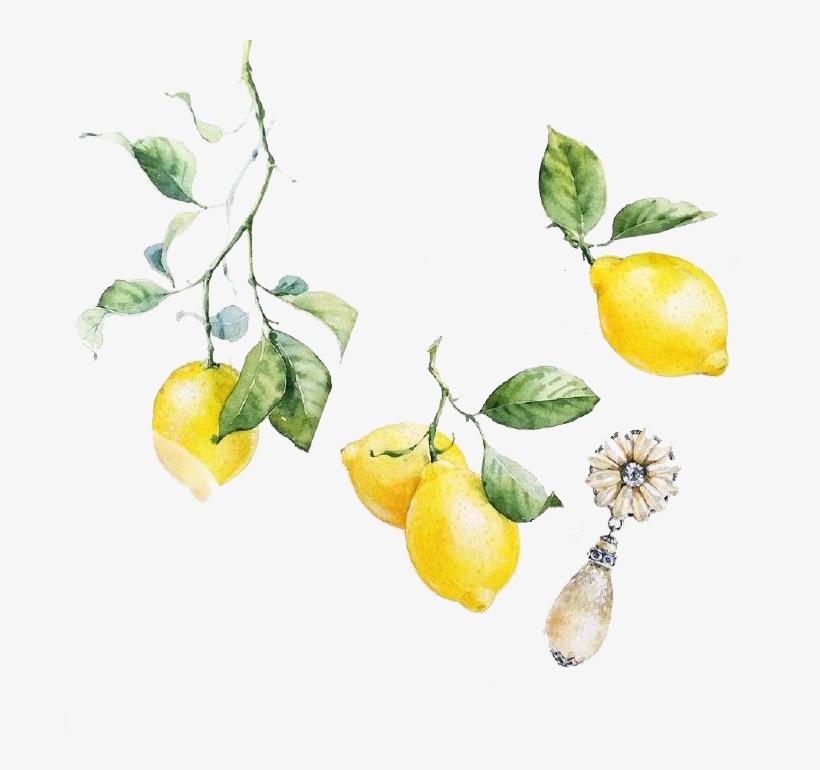 Visual Arts Watercolor Painting Image Black And White - Watercolor Lemon Transparent, transparent png #8447