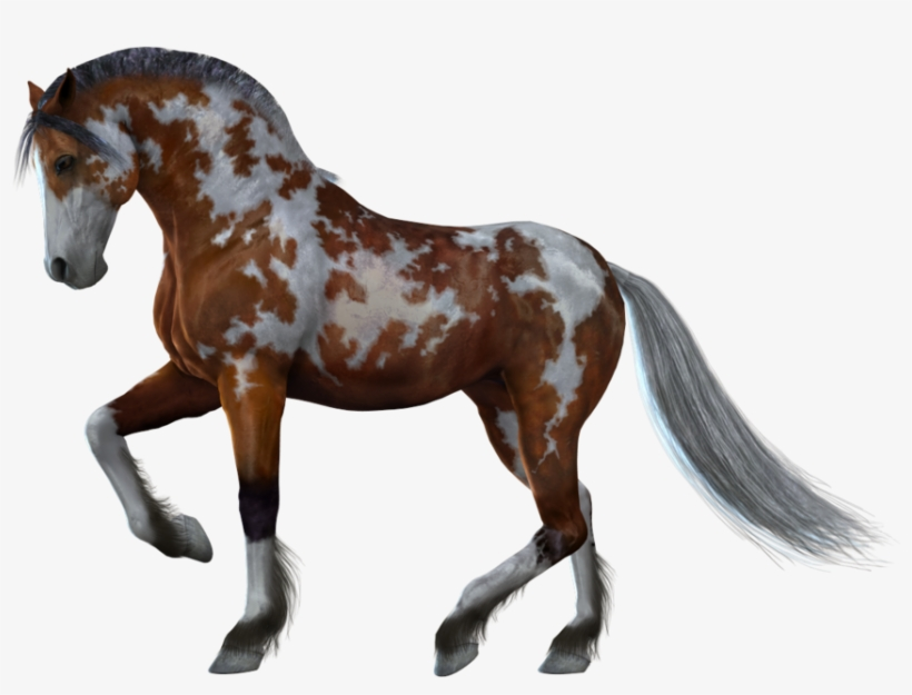 Horse Png Image - Horse With White Background, transparent png #9064