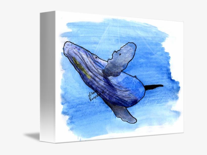 Transparent Whale Watercolor Clipart - Humpback Whale Drawng, transparent png #10994