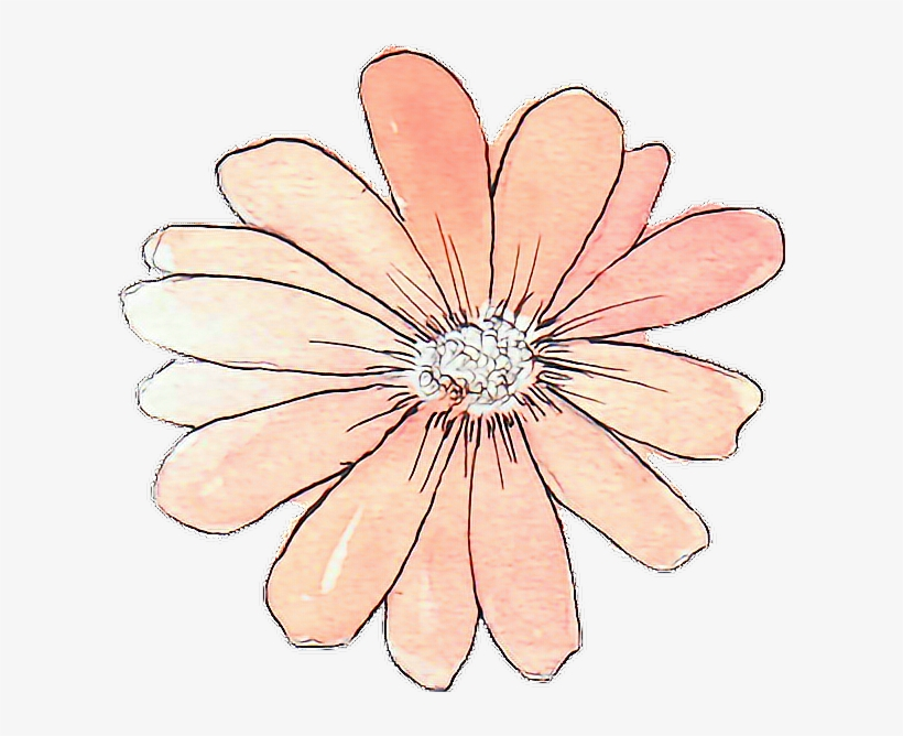 Tumblr Drawing Watercolor Peach Flower - Flower Stickers Tumblr Transparent, transparent png #11224
