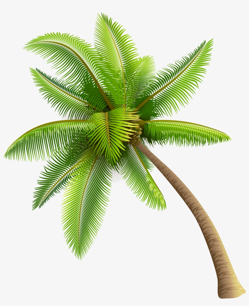 Green Palm Tree Png Clipart - Coconut Tree Png, transparent png #12250