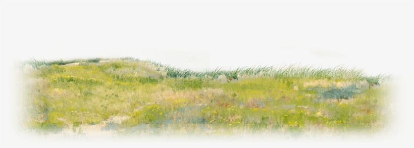 Animation - Grass Png Plan Water Color, transparent png #12497