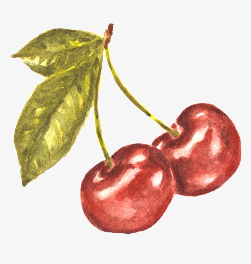 Pair Of Cherries Watercolor Study - Watercolor Cherries, transparent png #12660