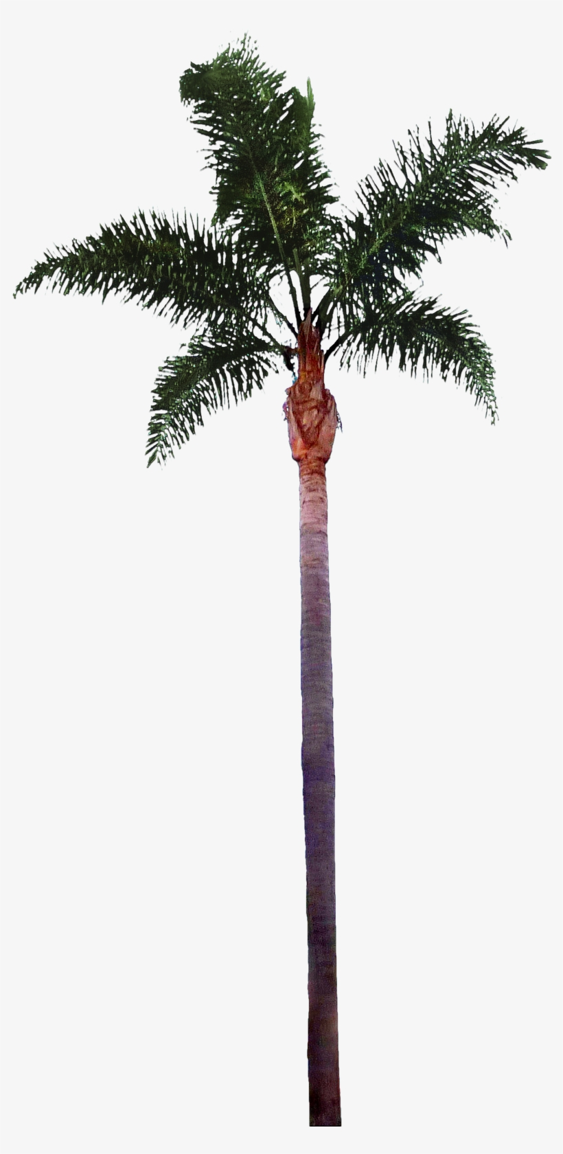 Palm Tree Png File - Palm Tree Trunk Png, transparent png #13464