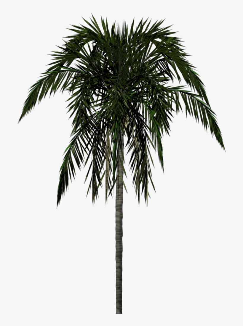 Palm Tree Png - Palm Tree Texture Png, transparent png #14292