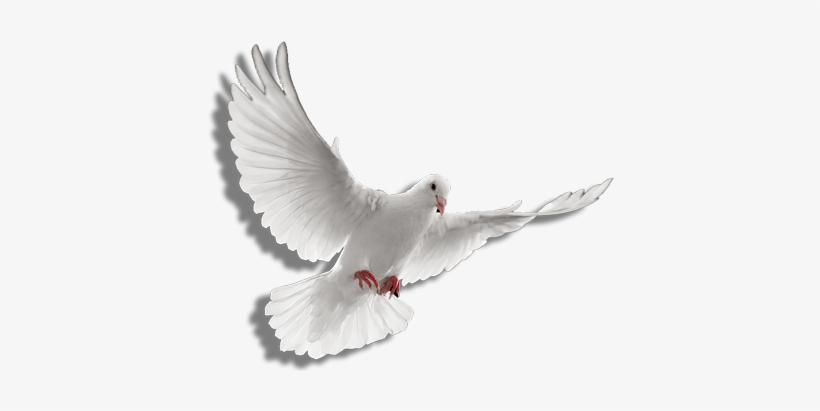 Holy Spirit Dove Png Clip Art Transparent Stock - Holy Spirit Dove Png, transparent png #14840
