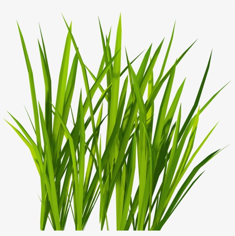 Green Grass Png Clip Art - Grass Png, transparent png #15049