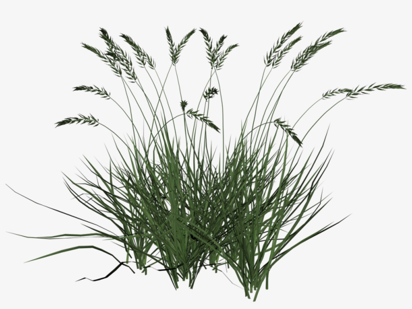Free Icons Png - Tall Grass Transparent Background, transparent png #15141