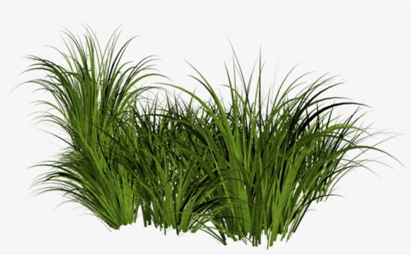 Beach Grass Png Jpg Free Stock - Tall Grass Transparent Background, transparent png #15393