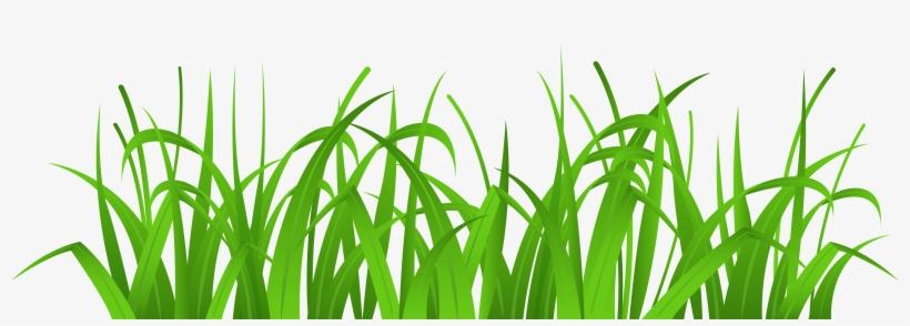 Grass transparent. Cover png clip art