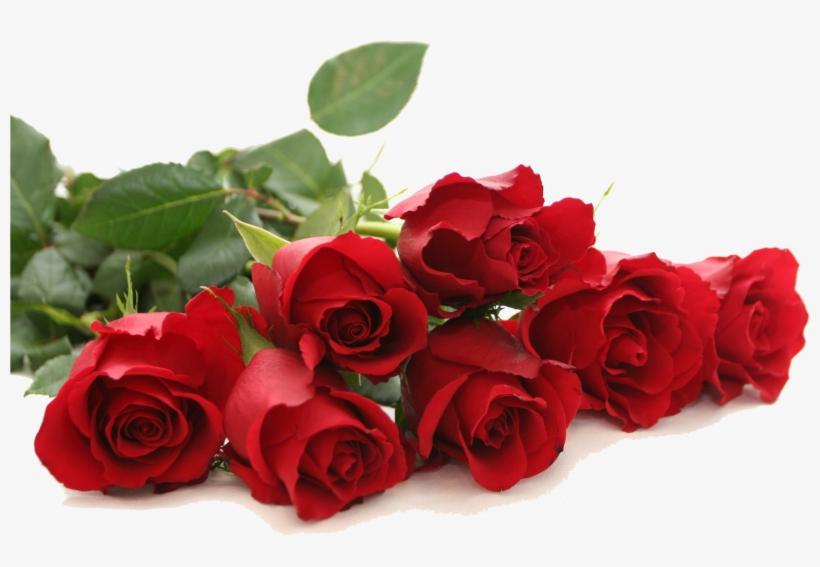 Red Rose Png Free Download Good Morning Red Rose Free