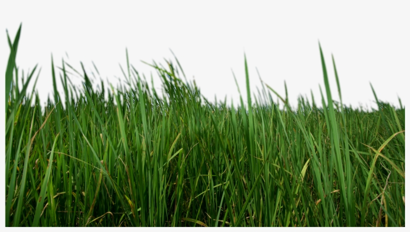 Grass Png Transparent - Transparent Grass, transparent png #18079