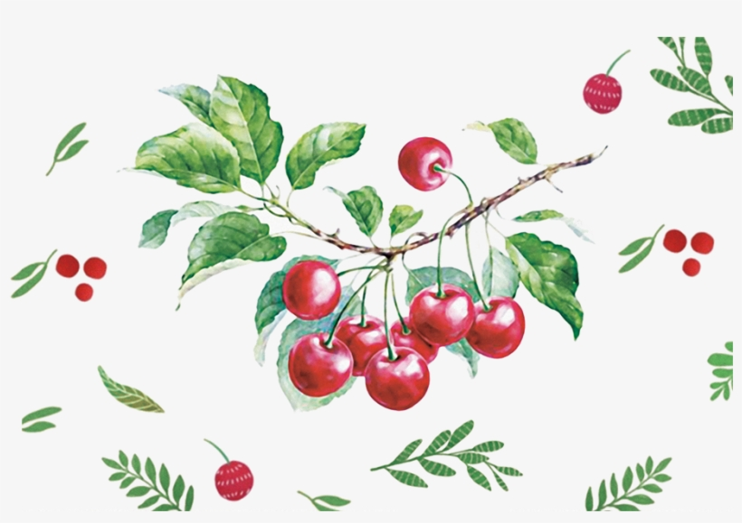 Vector Cherry Hand Drawn - Png Watercolor Cherry Vector, transparent png #18265