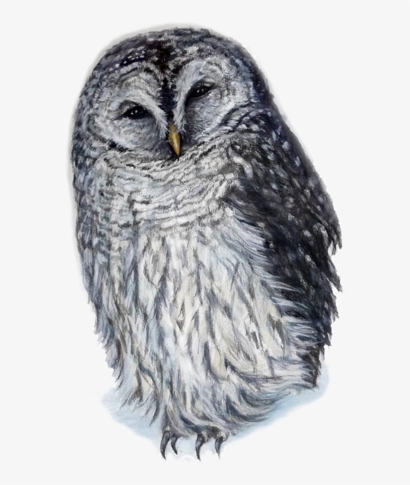 Laughing Owl By Kara Skye - Owl, transparent png #101377