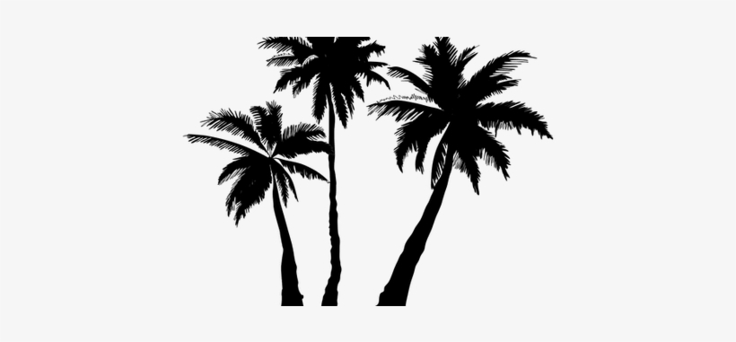 Clipart Transparent Stock Palm Trees Silhouette K Pictures - White Palm Tree Png, transparent png #101877