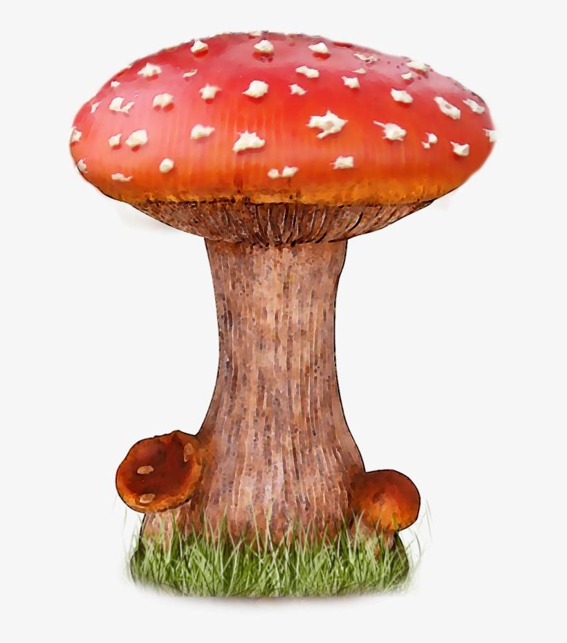 Mushroom Png File - Mushroom Png, transparent png #105342