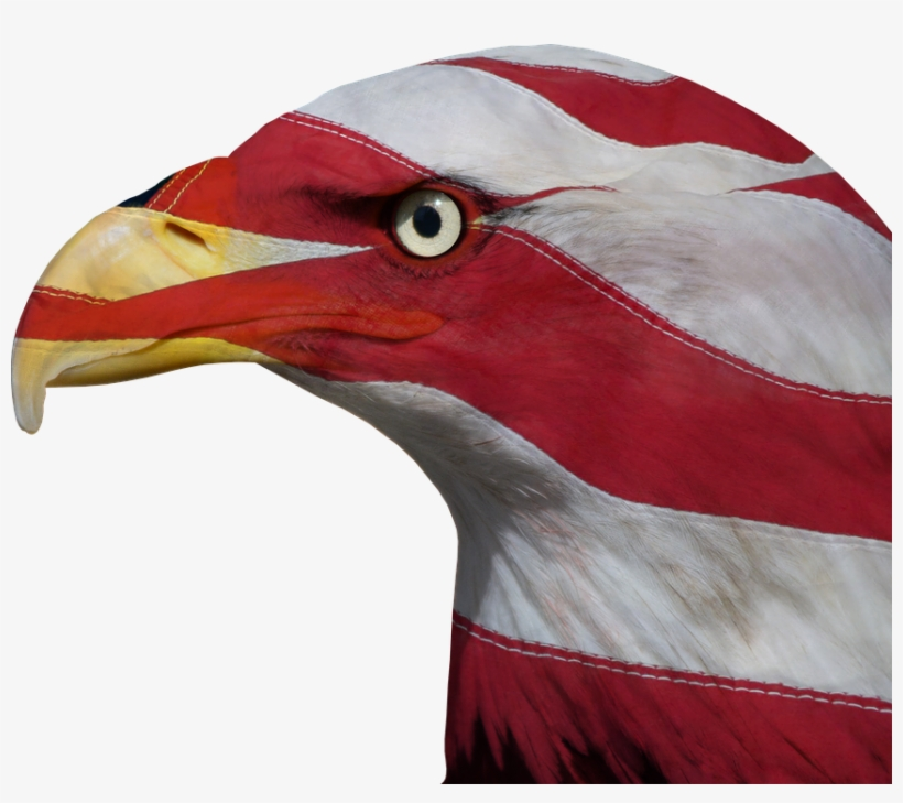 Usa, United States, Freedom, Bald Eagle, Patriotic - United States Of America, transparent png #1002153