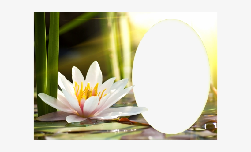 Transparent Water Lily Png Frame - Water Lily Frame, transparent png #1003737