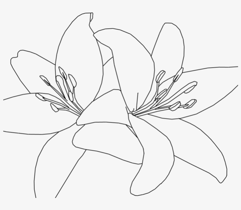Tiger Lilies Drawing At Getdrawings - Tiger Lily Clip Art, transparent png #1004303