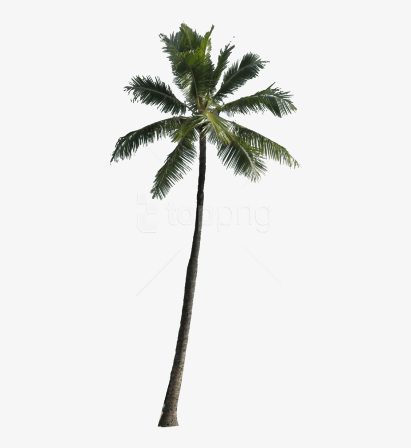 Download Tree Images Background - Free Png Palm Tree, transparent png #10065387