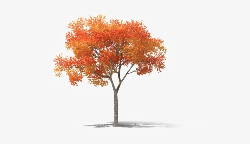 Realistic Tree Png High-quality Image - Png High Resolution Tree, transparent png #10065655