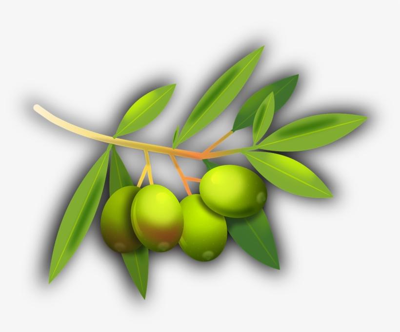 olives fruits olive tree png image gambar kartun buah zaitun free transparent png download pngkey olives fruits olive tree png image