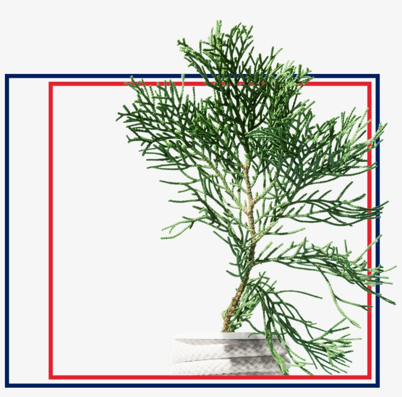 Icy - Red Pine, transparent png #10067266