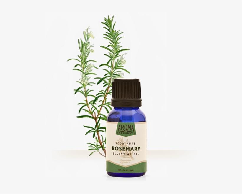 Rosemary Essential Oil Adalah, transparent png #10080982