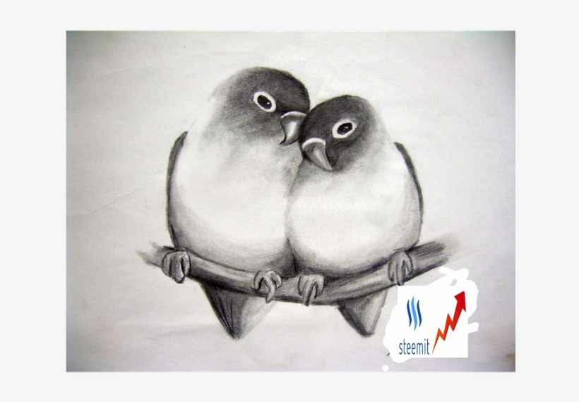 Beautiful Pencil Drawings Birds Png Beautiful Pencil Sketches Of Love Birds Free Transparent Png Download Pngkey