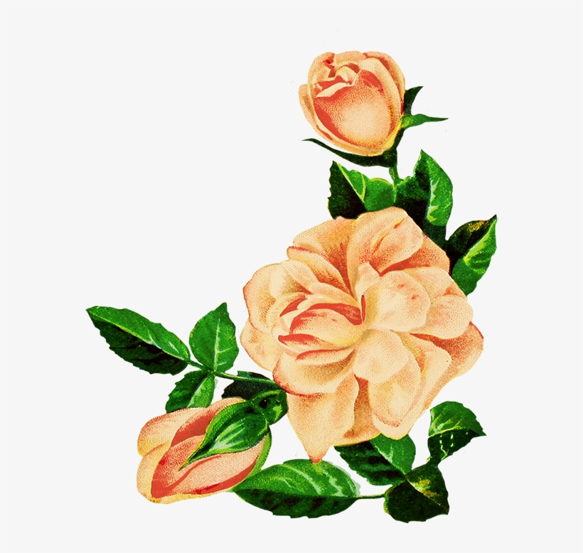 Rose Pictures Drawing At Getdrawings Png Pink Flowers Drawing