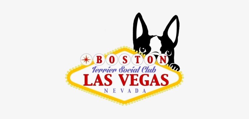 Las Vegas Boston Terrier Meetup - Boston Terrier Las Vegas, transparent png #1031155