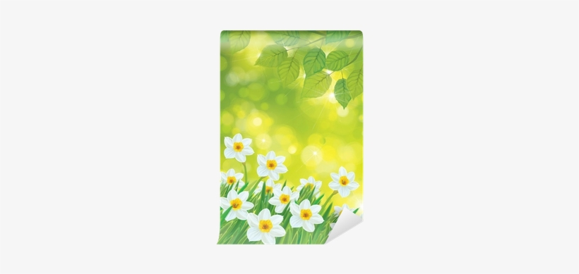 Vector Daffodil Flowers On Spring Background - Printing And Writing Paper, transparent png #1034521