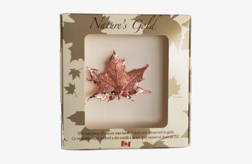 Maple Leaf Brooch - Bronze Canadian Maple Leaf Brooches, transparent png #1039459