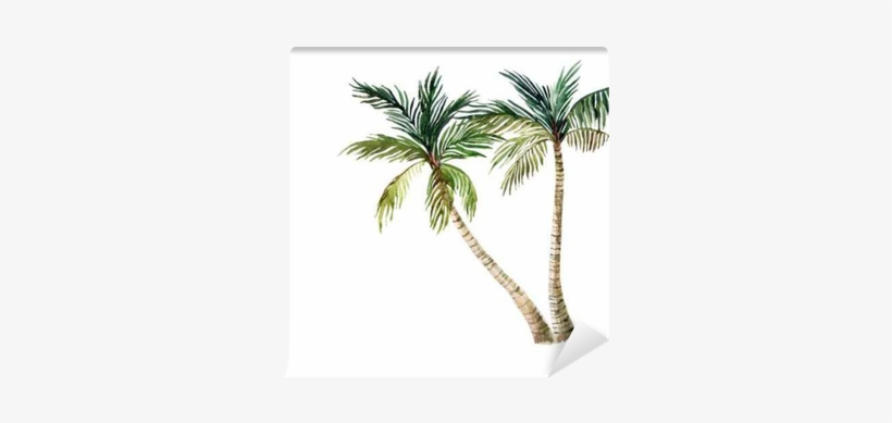 Palm Tree Isolated On White Background - Watercolor Palm Tree, transparent png #1042067