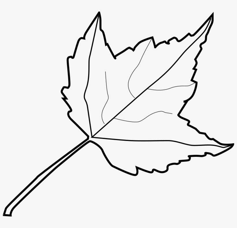 Leaf Outline Tree Outline With Leaves Clipart Clip Art Black And
