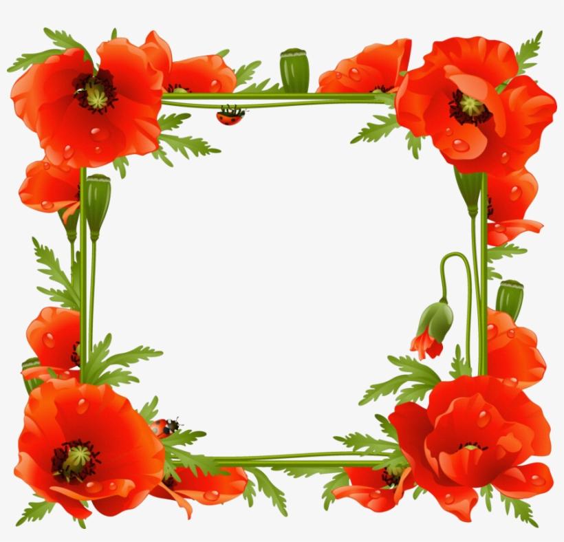 Poppy Flower Frame, transparent png #1067955
