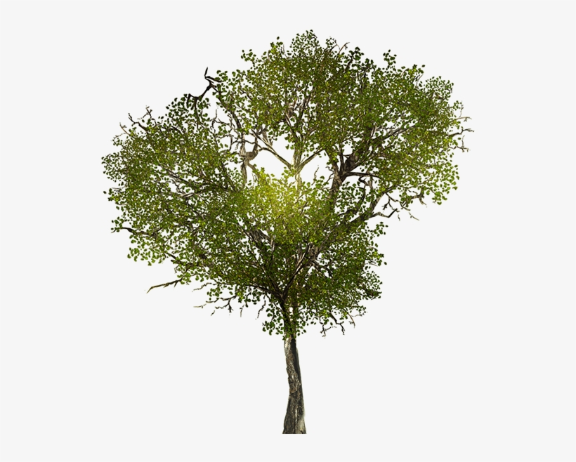 Texture For Large Leafy Branches For Tree Models - Trees For Photoshop Seamless, transparent png #1070354