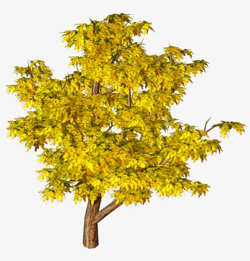 aerial tree png clip-art yellow tree png image - aerial view trees images