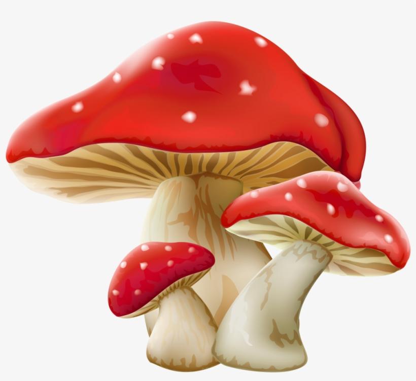 Mushroom Png Picture - Mushroom Png Transparent Background, transparent png #112396