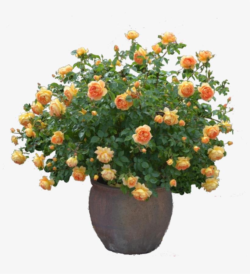 Rose Cutout Plant Png - Plant Flower Cutout Png, transparent png #113502