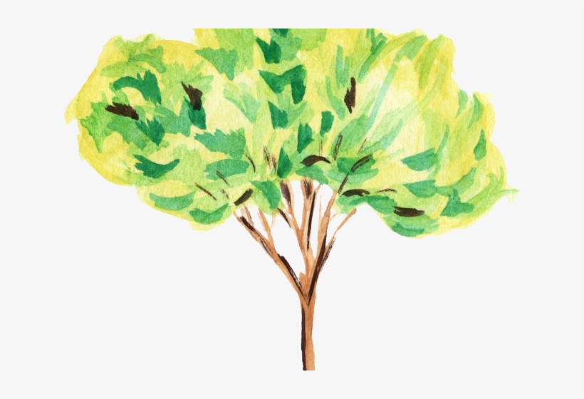 Water Color Clipart Tree - Tree Watercolour Clipart, transparent png #114635