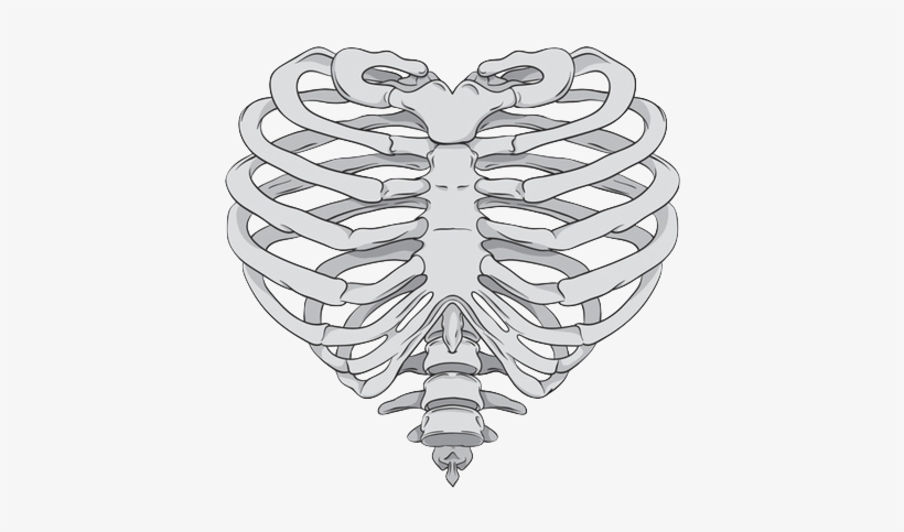 Via Tumblr Shared By Très Cool - Rib Cage Heart Drawing