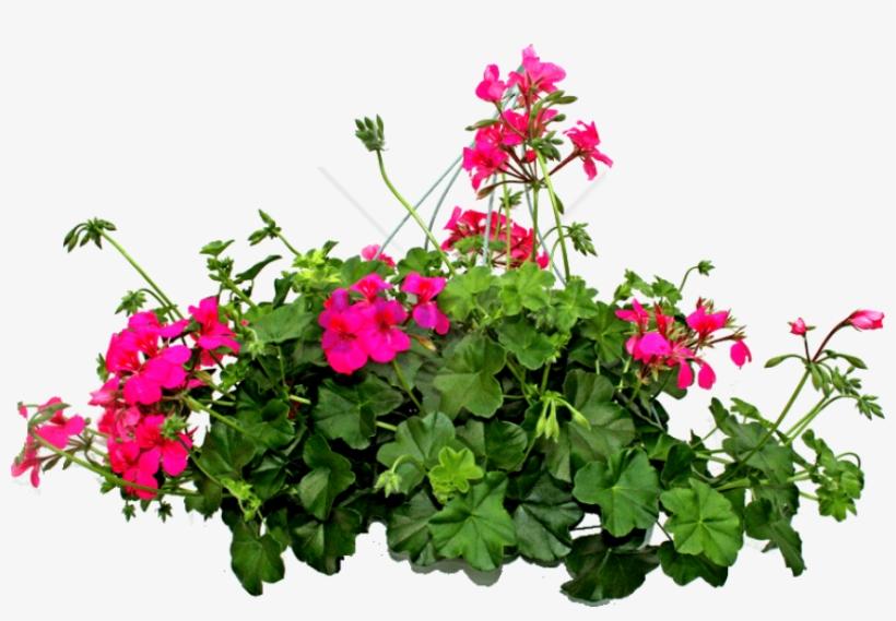 Plantas Png Sin Fondo