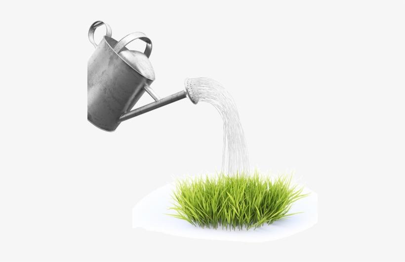 Es Muy Probable Que Las Plantas Sufran Algunos Daños - Sac Gazon Rapide Perfect Grass Canada Green 1kg - Probache, transparent png #1104121
